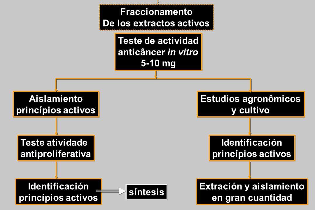 Fraccionamento De los extractos activos Teste de actividad anticâncer in vitro 5-10 mg Aislamiento princípios activos Teste atividade antiproliferativ