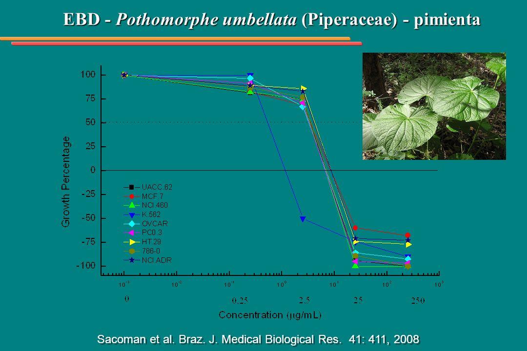 EBD - Pothomorphe umbellata (Piperaceae) - pimienta Sacoman et al. Braz. J. Medical Biological Res. 41: 411, 2008