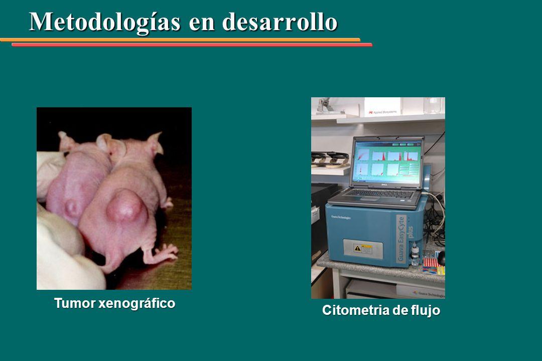 Metodologías en desarrollo Tumor xenográfico Citometria de flujo