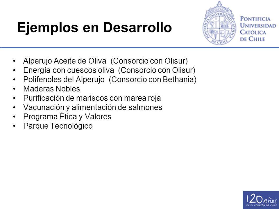Ejemplos en Desarrollo Alperujo Aceite de Oliva (Consorcio con Olisur) Energía con cuescos oliva (Consorcio con Olisur) Polifenoles del Alperujo (Cons