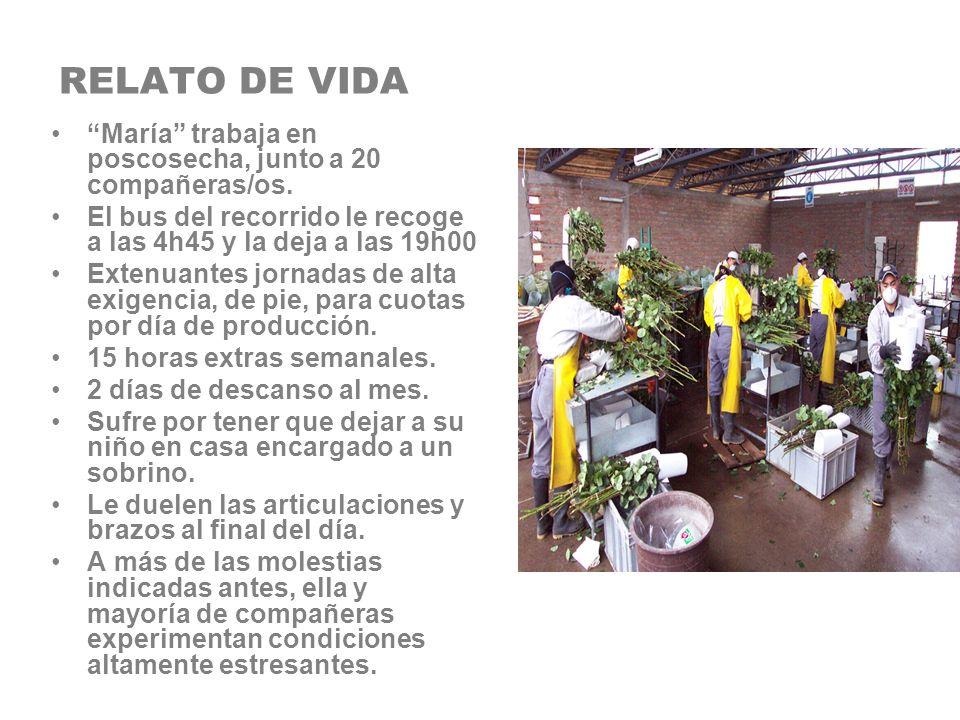 RELATO DE VIDA María trabaja en poscosecha, junto a 20 compañeras/os. El bus del recorrido le recoge a las 4h45 y la deja a las 19h00 Extenuantes jorn