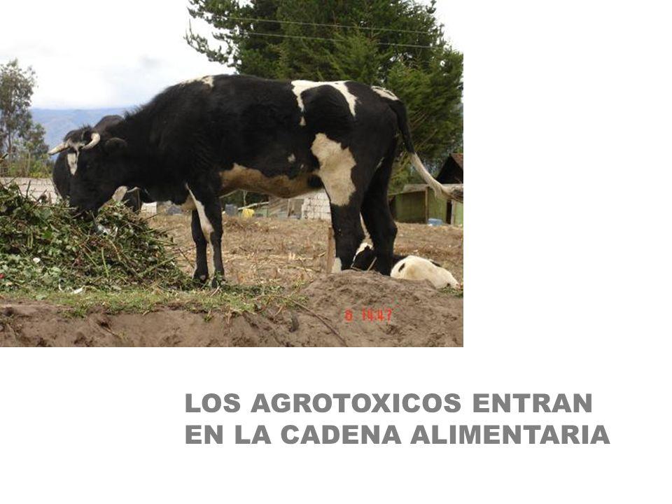 LOS AGROTOXICOS ENTRAN EN LA CADENA ALIMENTARIA