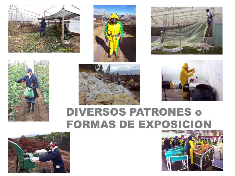 DIVERSOS PATRONES o FORMAS DE EXPOSICION