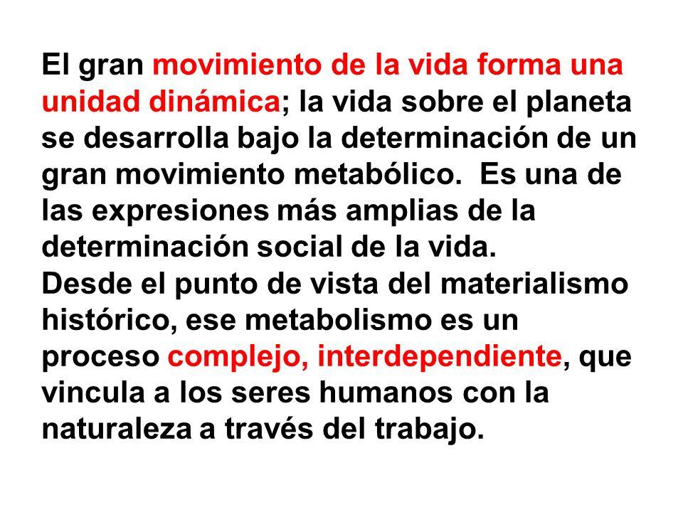 El gran movimiento de la vida forma una unidad dinámica; la vida sobre el planeta se desarrolla bajo la determinación de un gran movimiento metabólico