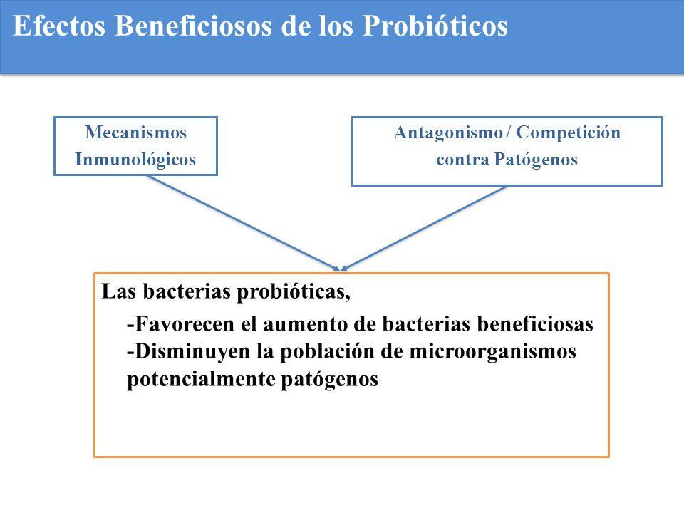 Acciones de los probióticos Reducen el crecimiento de patógenos en el tracto intestinal Reducen la translocación de bacterias intestinales a tejidos y órganos internos Mejoran la respuesta inmunitaria Normalizan una barrera mucosa deteriorada.