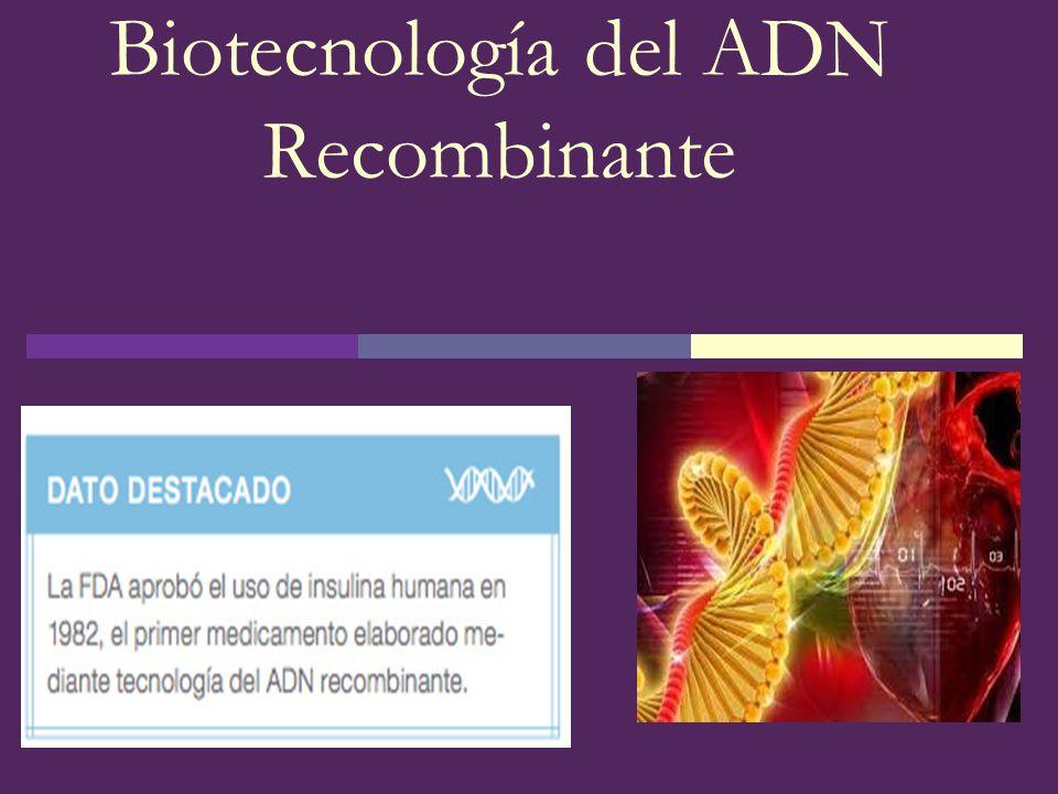 Vectores Plásmidos: moléculas de ADN circular Tienen su propio origen de replicación