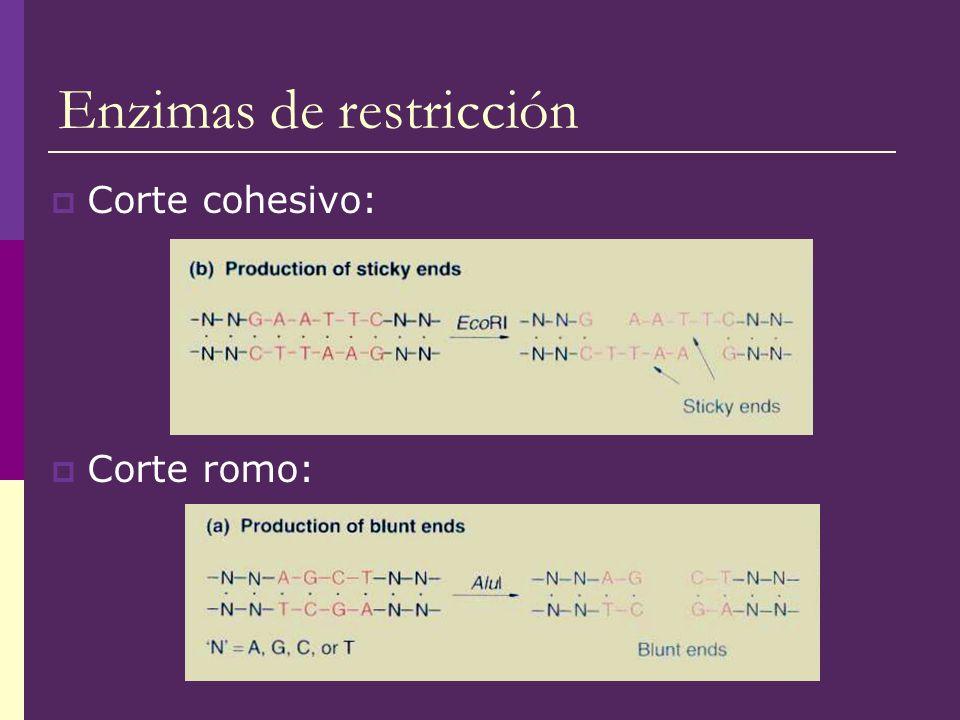 Enzimas de restricción Corte cohesivo: Corte romo: