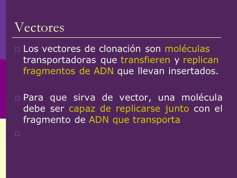 Vectores Los vectores de clonación son moléculas transportadoras que transfieren y replican fragmentos de ADN que llevan insertados. Para que sirva de
