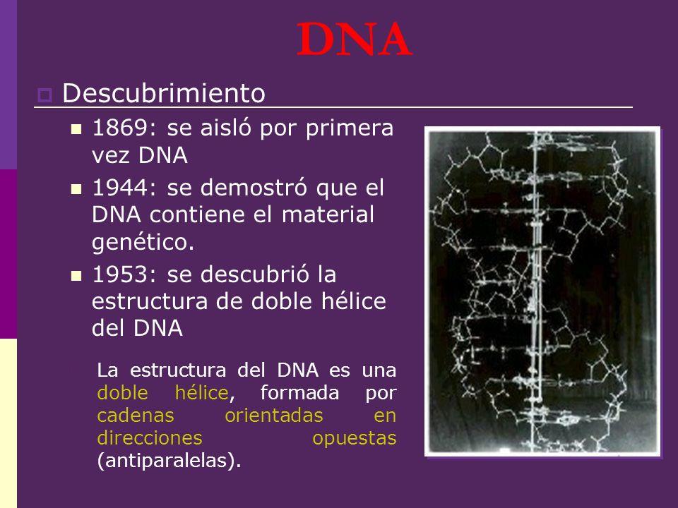 DNA Descubrimiento 1869: se aisló por primera vez DNA 1944: se demostró que el DNA contiene el material genético. 1953: se descubrió la estructura de