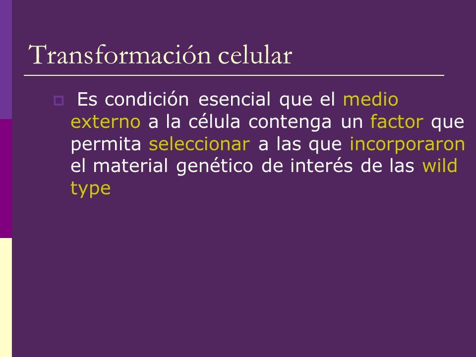 Transformación celular Es condición esencial que el medio externo a la célula contenga un factor que permita seleccionar a las que incorporaron el mat