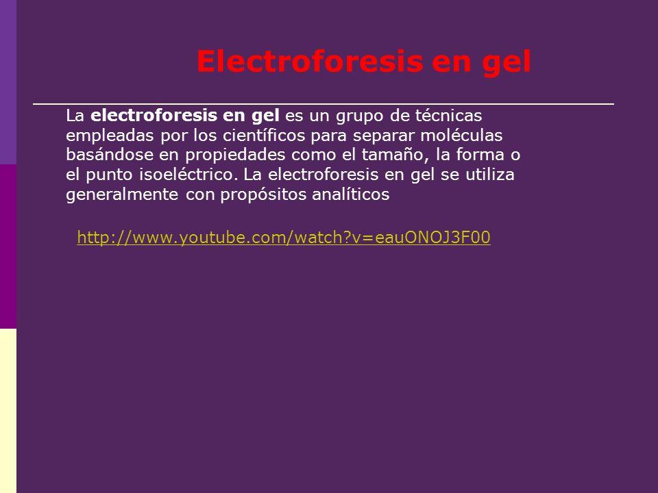 La electroforesis en gel es un grupo de técnicas empleadas por los científicos para separar moléculas basándose en propiedades como el tamaño, la form