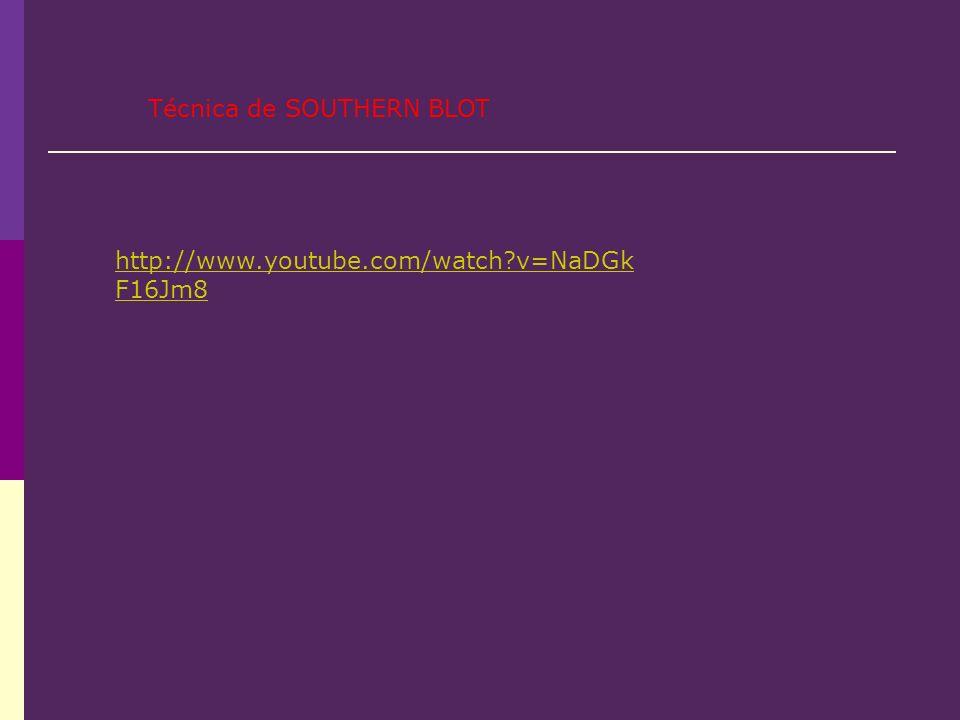 http://www.youtube.com/watch?v=NaDGk F16Jm8 Técnica de SOUTHERN BLOT