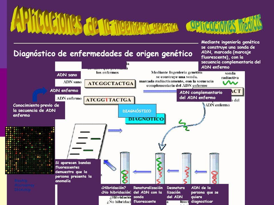Conocimiento previo de la secuencia de ADN enfermo Mediante ingeniería genética se construye una sonda de ADN, marcada (marcaje fluorescente), con la