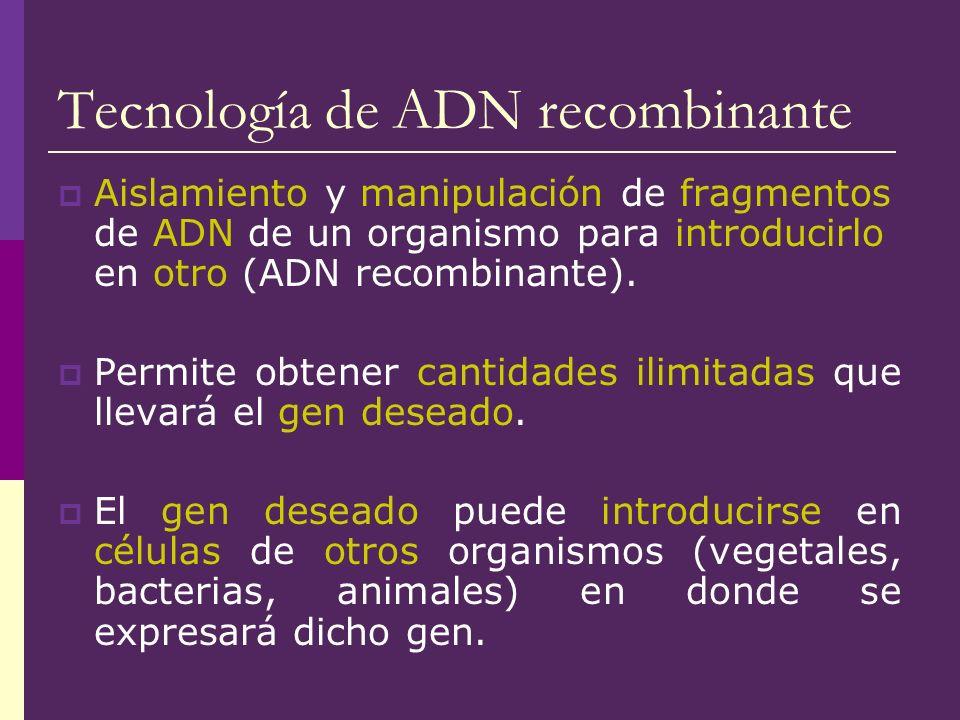Tecnología de ADN recombinante Aislamiento y manipulación de fragmentos de ADN de un organismo para introducirlo en otro (ADN recombinante). Permite o