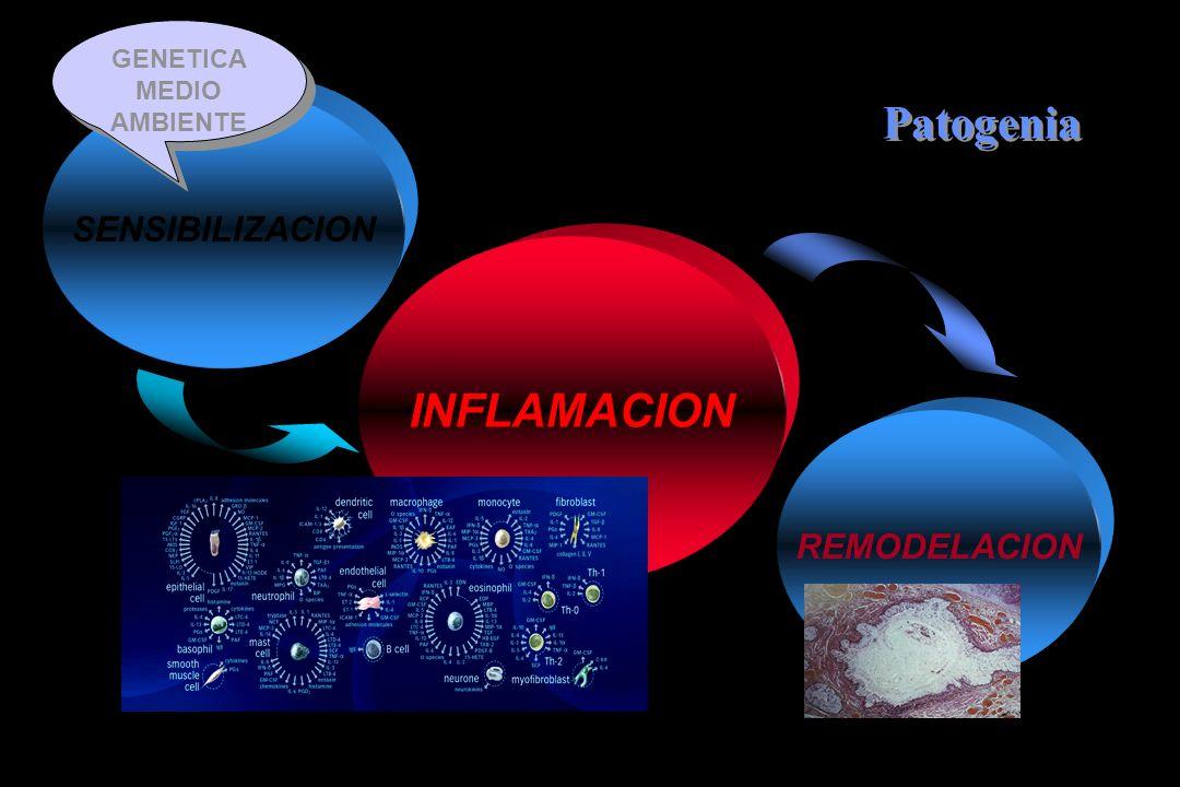 INFLAMACION SENSIBILIZACION REMODELACION Patogenia GENETICA MEDIO AMBIENTE GENETICA MEDIO AMBIENTE
