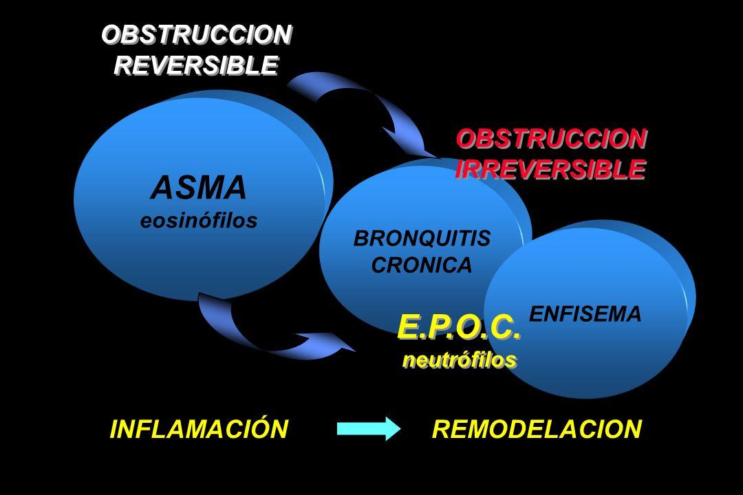 ASMA eosinófilos BRONQUITIS CRONICA ENFISEMA OBSTRUCCION REVERSIBLE OBSTRUCCION REVERSIBLE E.P.O.C. neutrófilos E.P.O.C. neutrófilos OBSTRUCCION IRREV
