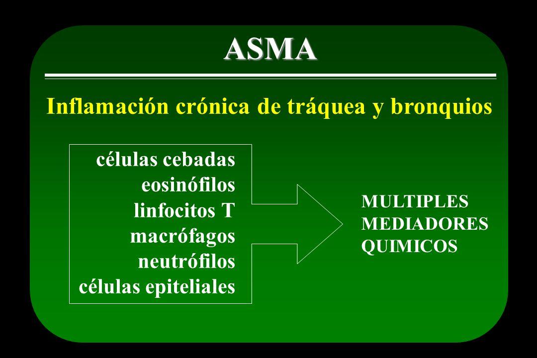 Inflamación crónica de tráquea y bronquios ASMA células cebadas eosinófilos linfocitos T macrófagos neutrófilos células epiteliales MULTIPLES MEDIADOR