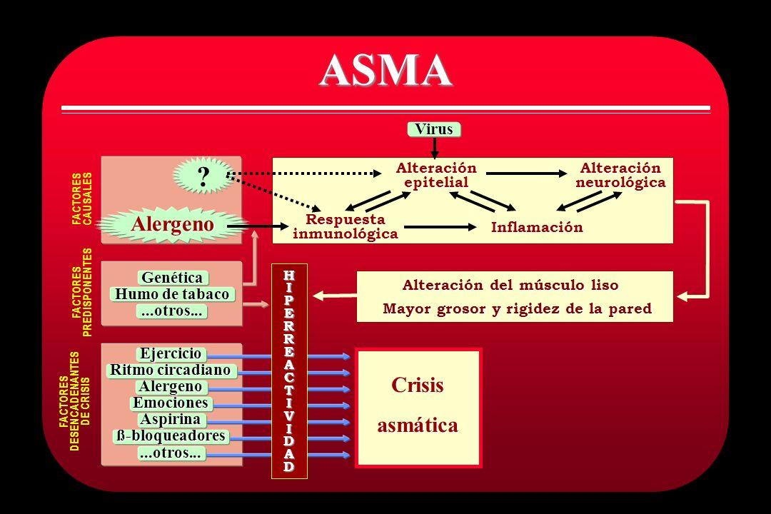 ASMA Alteraciónepitelial Respuestainmunológica Alteraciónneurológica Inflamación Alteración del músculo liso Mayor grosor y rigidez de la pared FACTOR