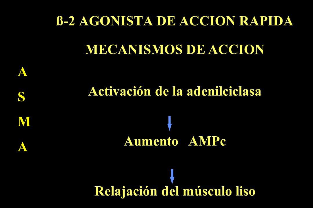 ß-2 AGONISTA DE ACCION RAPIDA A S M A MECANISMOS DE ACCION Activación de la adenilciclasa Aumento AMPc Relajación del músculo liso