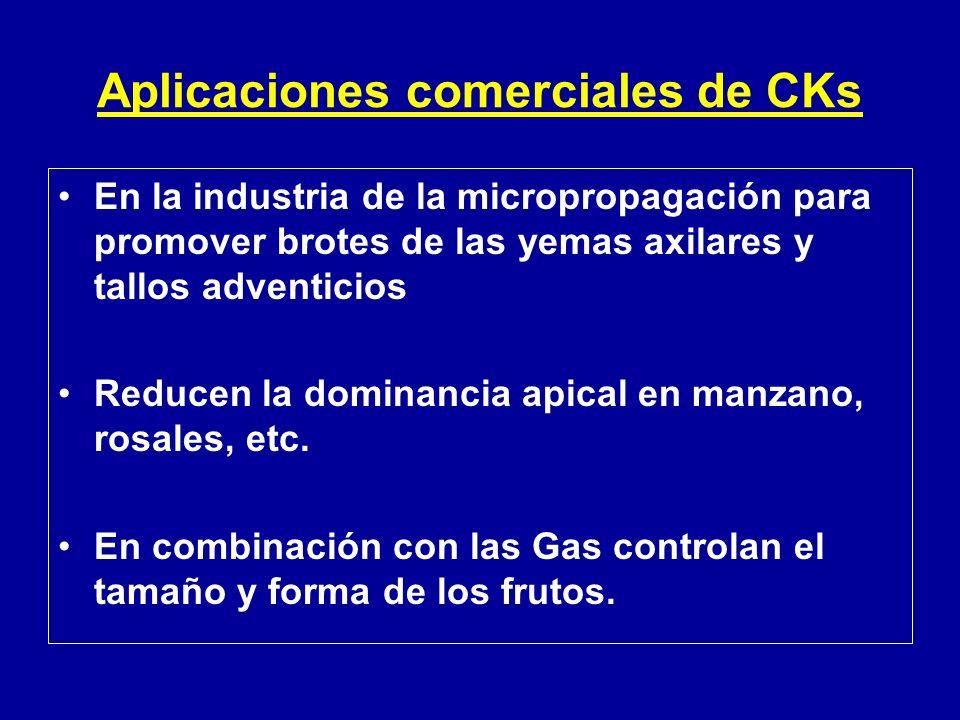Aplicaciones comerciales de CKs En la industria de la micropropagación para promover brotes de las yemas axilares y tallos adventicios Reducen la domi