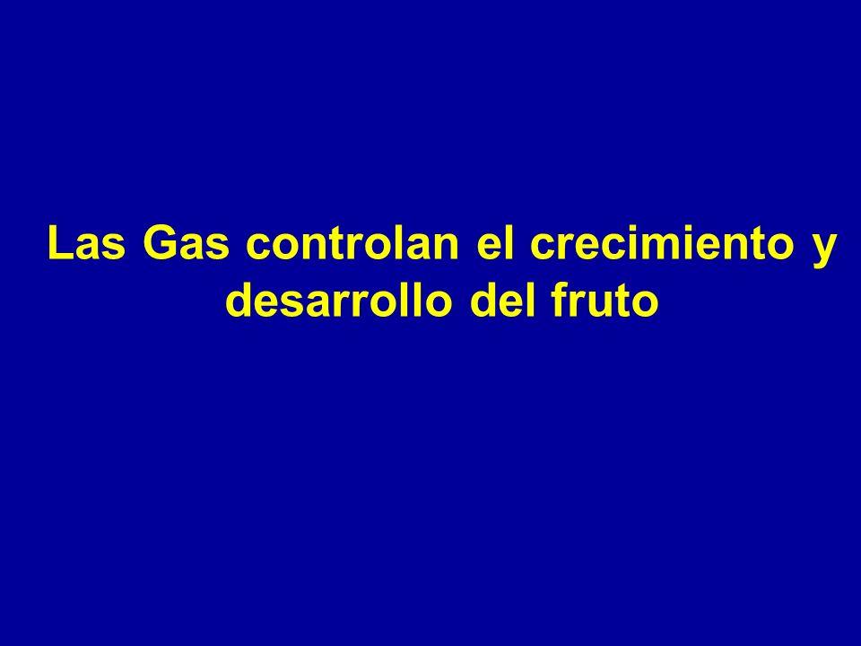 Las Gas controlan el crecimiento y desarrollo del fruto