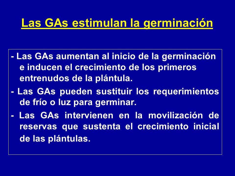 - Las GAs aumentan al inicio de la germinación e inducen el crecimiento de los primeros entrenudos de la plántula. - Las GAs pueden sustituir los requ