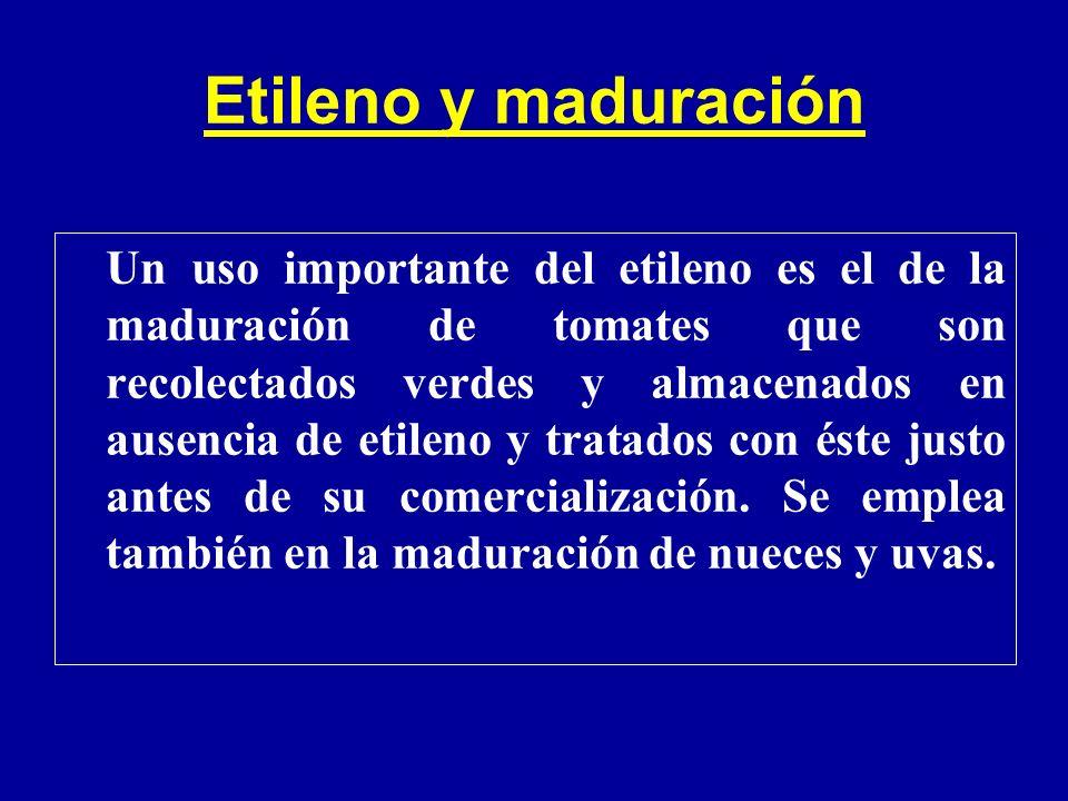 Etileno y maduración Un uso importante del etileno es el de la maduración de tomates que son recolectados verdes y almacenados en ausencia de etileno