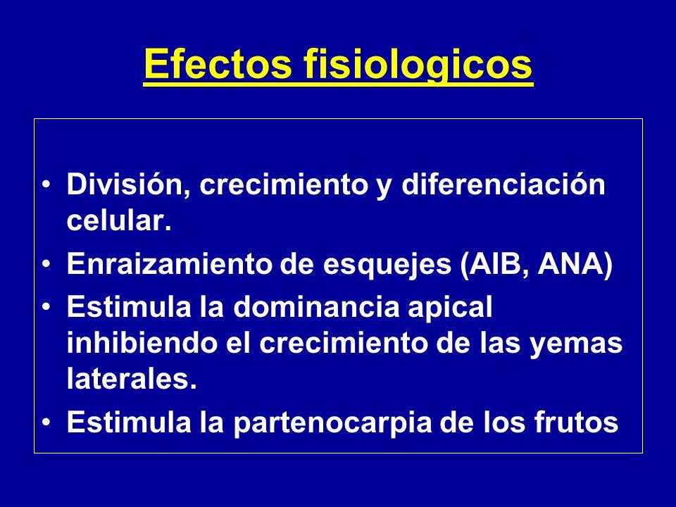 Efectos fisiologicos División, crecimiento y diferenciación celular. Enraizamiento de esquejes (AIB, ANA) Estimula la dominancia apical inhibiendo el