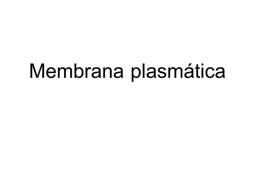 Figure 10-1a Molecular Biology of the Cell (© Garland Science 2008) Bicapa lipídica con proteínas de 5nm de espesor que delimita la célula y mantiene las diferencias de composición entre el citosol y el medio extracelular.
