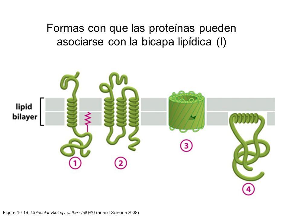 Figure 10-19 Molecular Biology of the Cell (© Garland Science 2008) Formas con que las proteínas pueden asociarse con la bicapa lipídica (I)