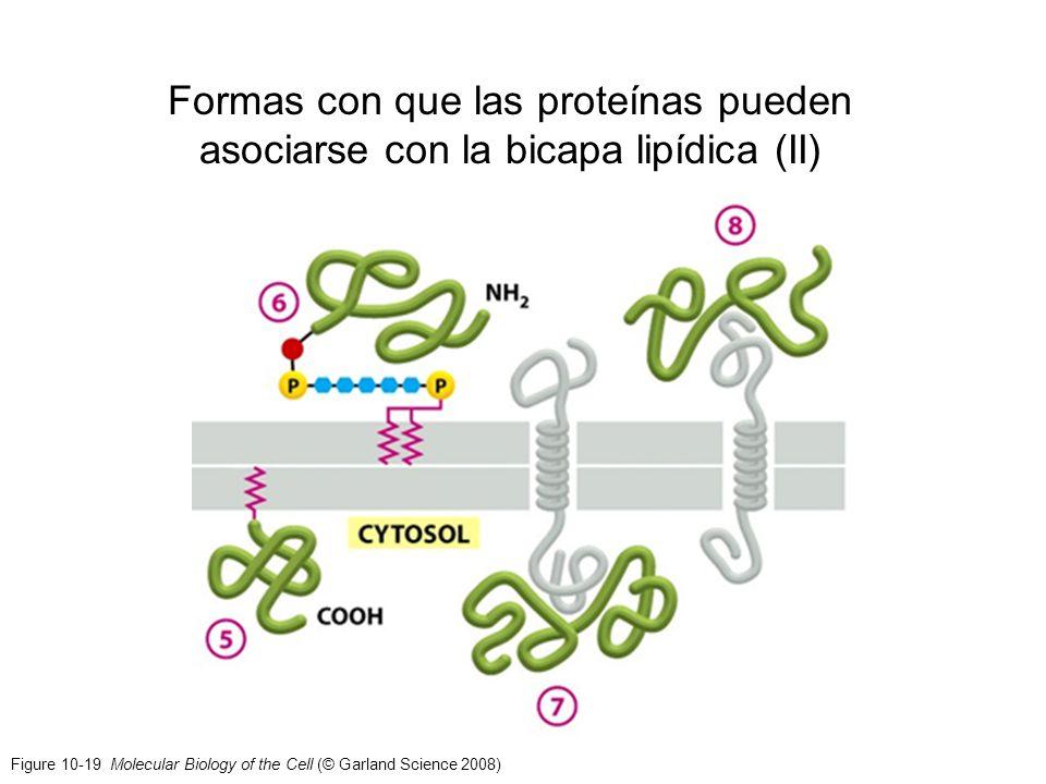 Figure 10-19 Molecular Biology of the Cell (© Garland Science 2008) Formas con que las proteínas pueden asociarse con la bicapa lipídica (II)