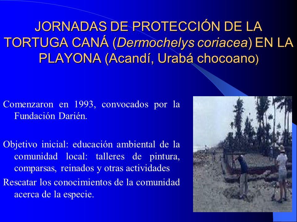 JORNADAS DE PROTECCIÓN DE LA TORTUGA CANÁ (Dermochelys coriacea) EN LA PLAYONA (Acandí, Urabá chocoano ) Comenzaron en 1993, convocados por la Fundaci