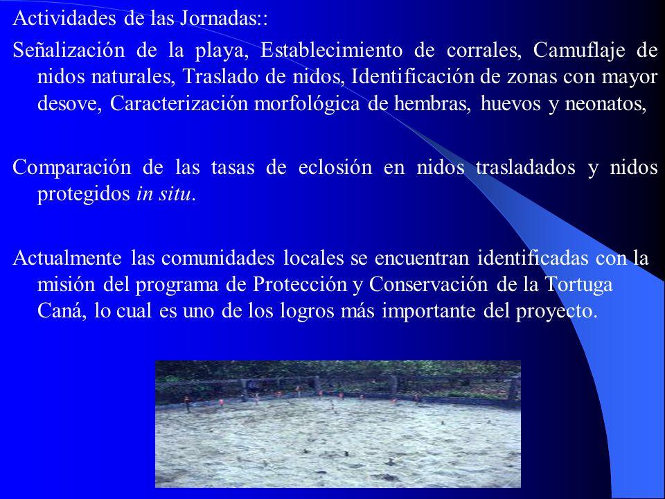 Actividades de las Jornadas:: Señalización de la playa, Establecimiento de corrales, Camuflaje de nidos naturales, Traslado de nidos, Identificación d
