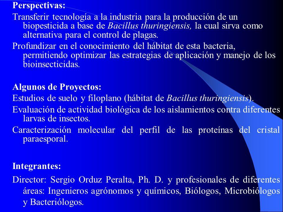 Perspectivas: Transferir tecnología a la industria para la producción de un biopesticida a base de Bacillus thuringiensis, la cual sirva como alternat
