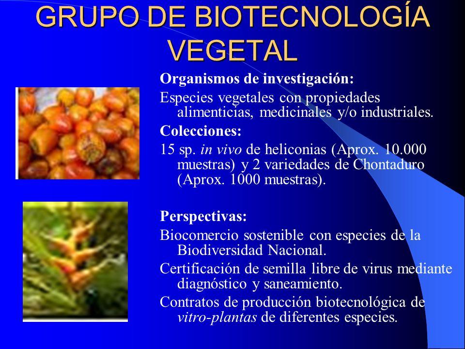 GRUPO DE BIOTECNOLOGÍA VEGETAL Organismos de investigación: Especies vegetales con propiedades alimenticias, medicinales y/o industriales. Colecciones