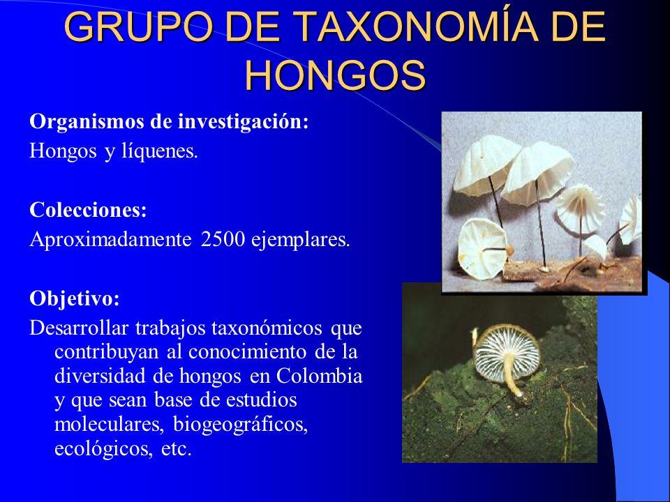 GRUPO DE TAXONOMÍA DE HONGOS Organismos de investigación: Hongos y líquenes. Colecciones: Aproximadamente 2500 ejemplares. Objetivo: Desarrollar traba