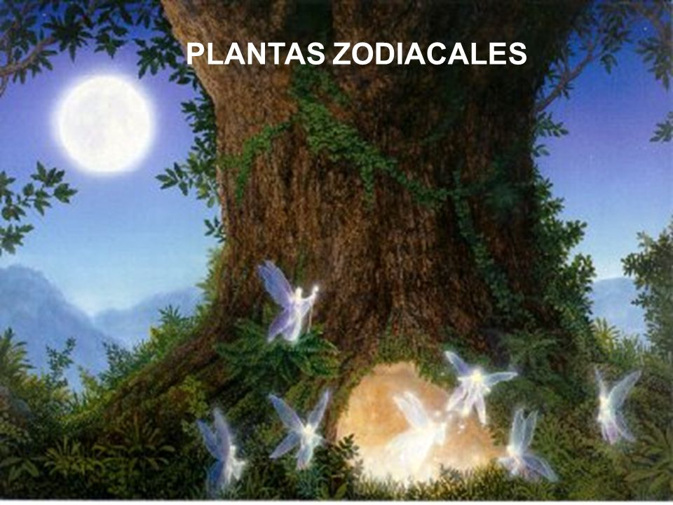 Rige: caderas y muslos Metal: estaño Piedra: aloe Perfume: zafiro azul Planta: maguey Flor: hortensia Planeta: Júpiter Color: azul Elemento: Fuego.