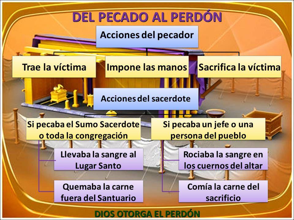 DEL PECADO AL PERDÓN Acciones del pecador Trae la víctimaImpone las manosSacrifica la víctima Acciones del sacerdote Si pecaba el Sumo Sacerdote o tod