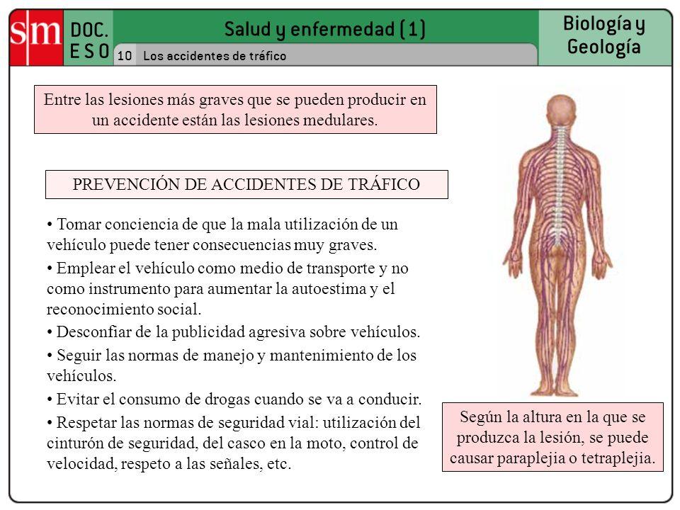 Salud y enfermedad (1) DOC. E S O Biología y Geología 10Los accidentes de tráfico Según la altura en la que se produzca la lesión, se puede causar par