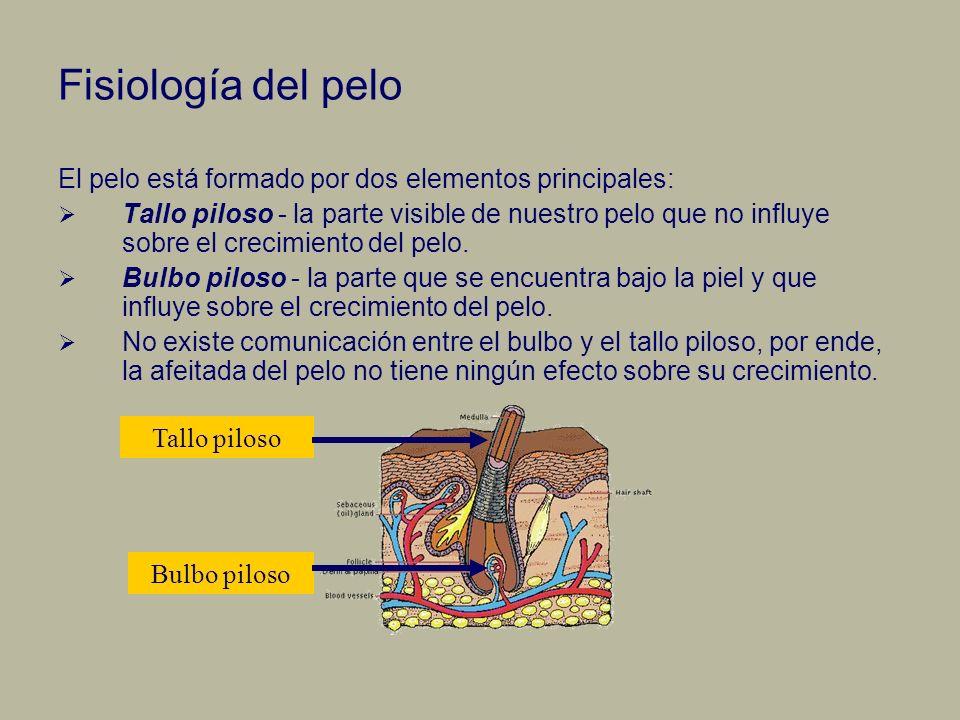 Fisiología del folículo piloso La papila dérmica se encuentra en la base del folículo piloso y la alimenta el torrente sanguíneo que transporta nutrientes para producir el pelo nuevo, por ello es esencial para el crecimiento del pelo.