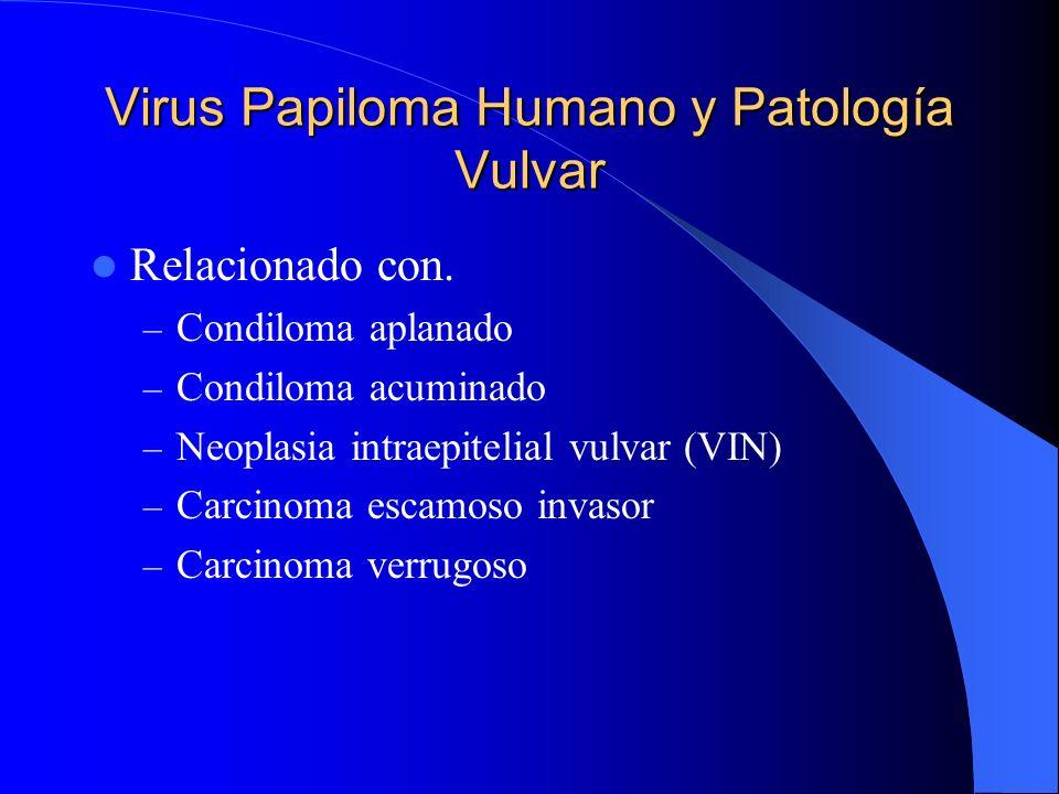 Virus Papiloma Humano y Patología Vulvar Relacionado con. – Condiloma aplanado – Condiloma acuminado – Neoplasia intraepitelial vulvar (VIN) – Carcino