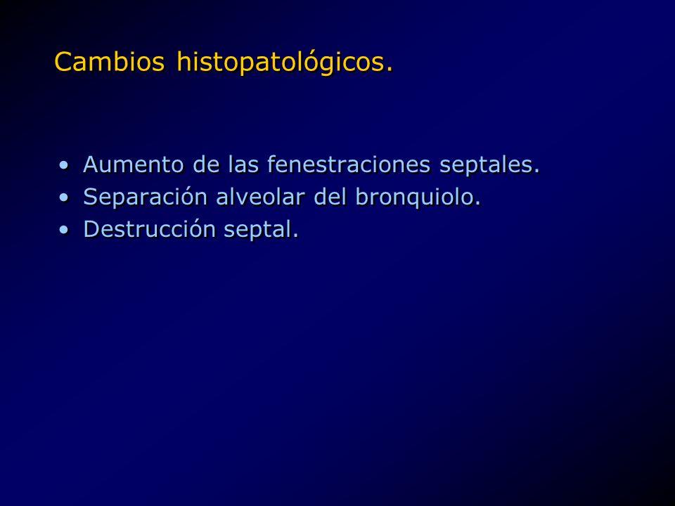 Cambios histopatológicos. Aumento de las fenestraciones septales. Separación alveolar del bronquiolo. Destrucción septal. Aumento de las fenestracione