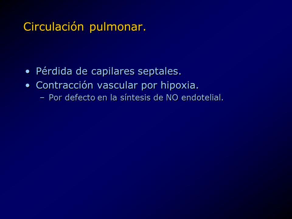 Circulación pulmonar. Pérdida de capilares septales. Contracción vascular por hipoxia. –Por defecto en la síntesis de NO endotelial. Pérdida de capila