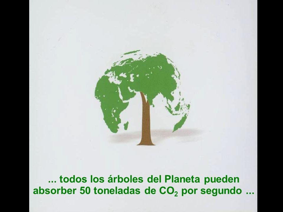 Sesión de Formación - PARTICIPACIÓN PÚBLICA www.transportlearning.net con el apoyo de:... todos los árboles del Planeta pueden absorber 50 toneladas d
