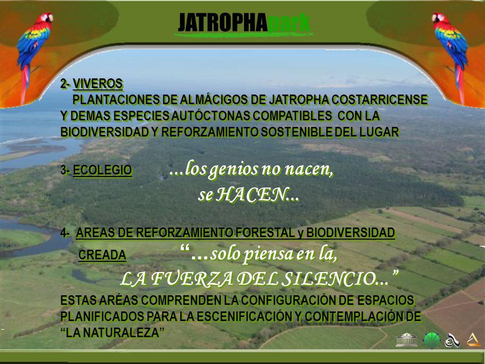 2- VIVEROS PLANTACIONES DE ALMÁCIGOS DE JATROPHA COSTARRICENSE Y DEMAS ESPECIES AUTÓCTONAS COMPATIBLES CON LA BIODIVERSIDAD Y REFORZAMIENTO SOSTENIBLE
