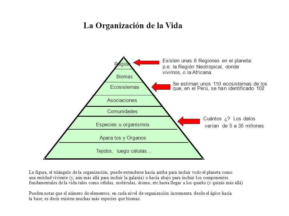La Organización de la Vida La figura, el triángulo de la organización, puede extenderse hacia arriba para incluir todo el planeta como una entidad viv