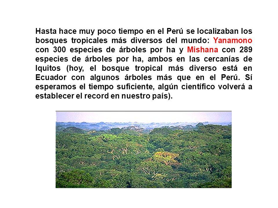 Hasta hace muy poco tiempo en el Perú se localizaban los bosques tropicales más diversos del mundo: Yanamono con 300 especies de árboles por ha y Mish