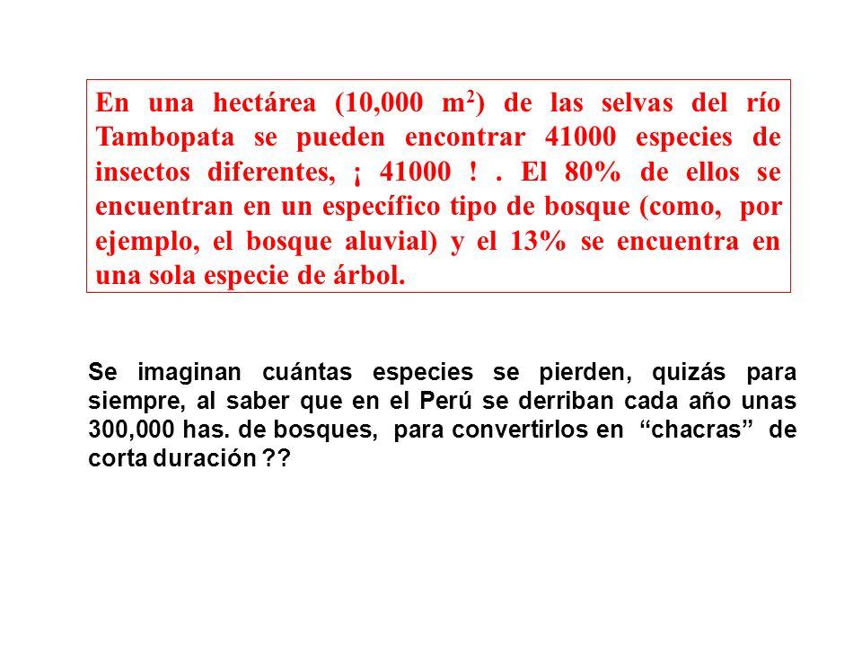 Se imaginan cuántas especies se pierden, quizás para siempre, al saber que en el Perú se derriban cada año unas 300,000 has. de bosques, para converti