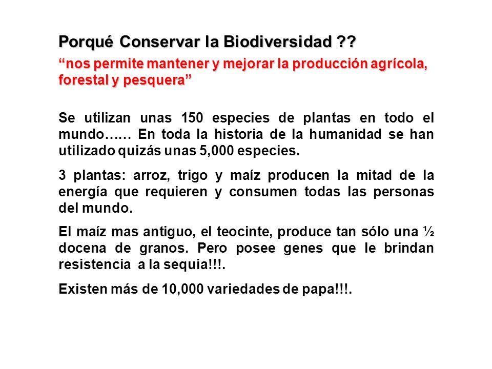 Porqué Conservar la Biodiversidad ?? Se utilizan unas 150 especies de plantas en todo el mundo…… En toda la historia de la humanidad se han utilizado