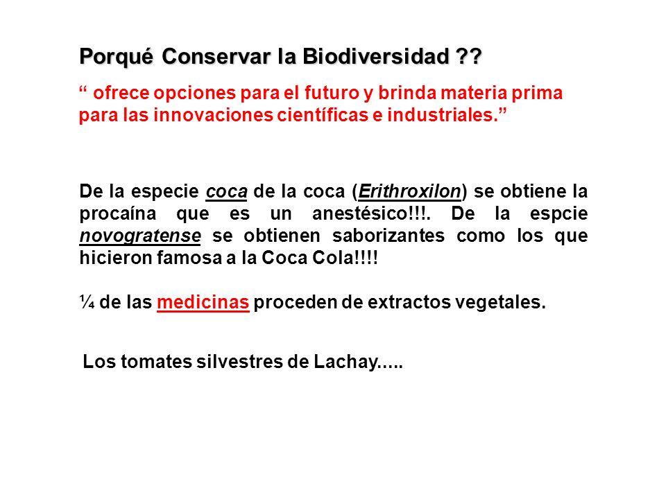 ¼ de las medicinas proceden de extractos vegetales.medicinas De la especie coca de la coca (Erithroxilon) se obtiene la procaína que es un anestésico!